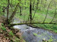 Olšanský potok